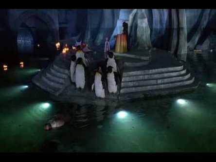 BR_Penguin_burial